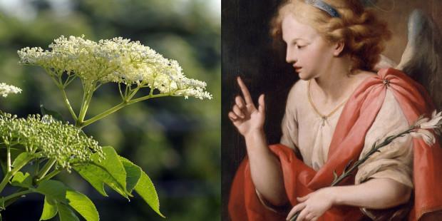 web3-angel-gabriel-angelica-plant-pixabaypublic-domain